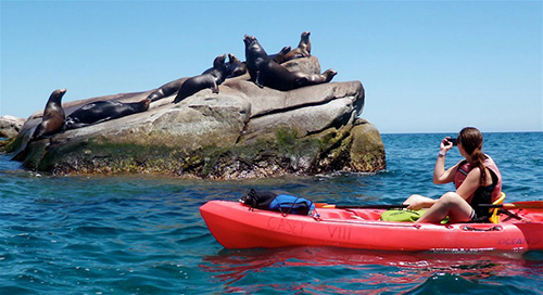 Cabo Pulmo Kayaking Tour in Los Cabos