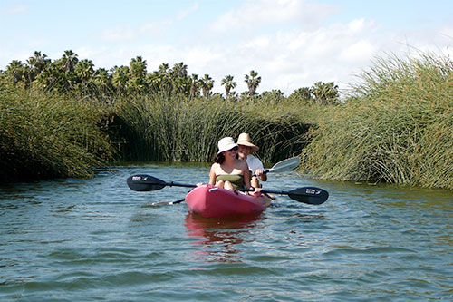 Estuary Kayaking Tour in Los Cabos